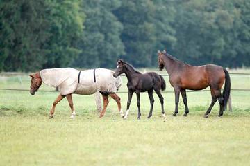 Fohlen+Mutterstute in Herde