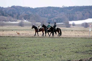 pr-19-02-06-d029.1.Reiter in Donaumoos.jpg