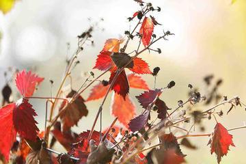 Stillleben Blaetter-Laub-Herbst 2015-d017