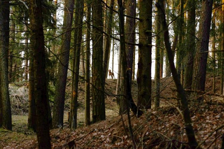 Hund, Jagd, Spaziergang, Natur