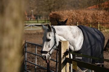 Details-Pferde-Weide-Zunge