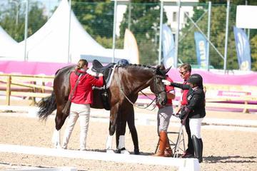 m-17-35-d0700-Details-Para-Grade I-Vorbereiten-Elke Philipp-GER-Pferd Regalitz-HANN