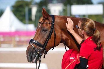 m-17-35-d0588-Details-Para-Pferd Romeo Royal-HANN
