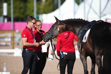 m-17-35-d0524-Pferde Steffen Zeibig-Feel Good-HANNSuzanna Hext-GEBR-Abira-BAY