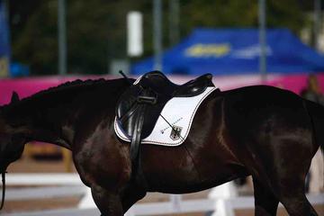 m-17-35-d0519-Pferde Steffen Zeibig-Feel Good-HANNSuzanna Hext-GEBR-Abira-BAY